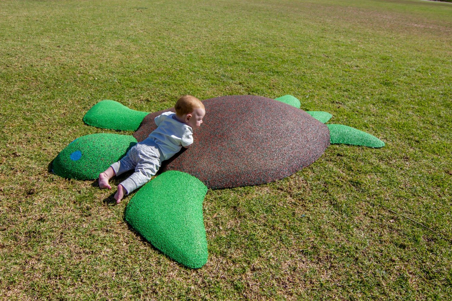 Poured-in-Place Turtle – Infant Playgrounds