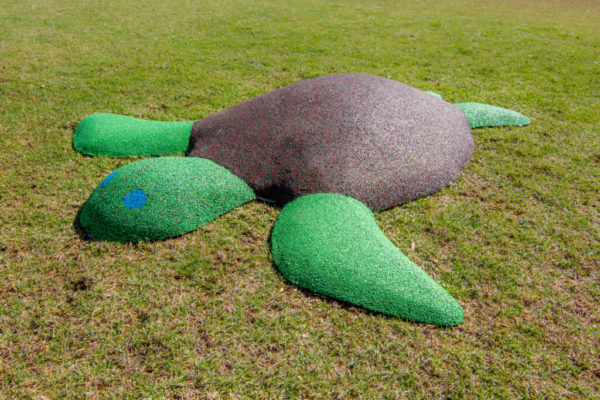 PIP Turtle